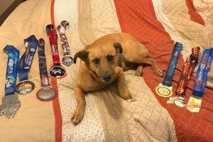 runDisney Medals with Dog